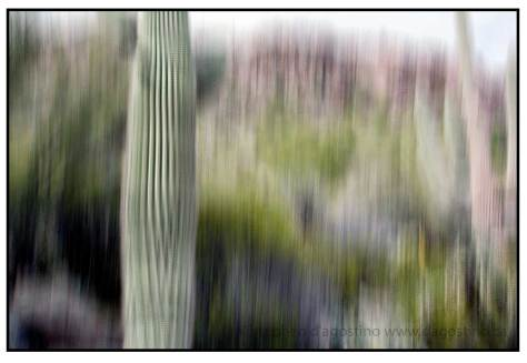 photo impressionistic photograph of cactus