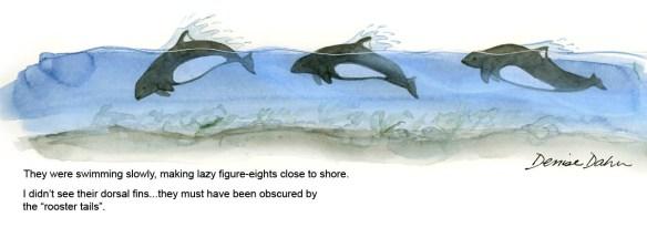 dalls porpoises2