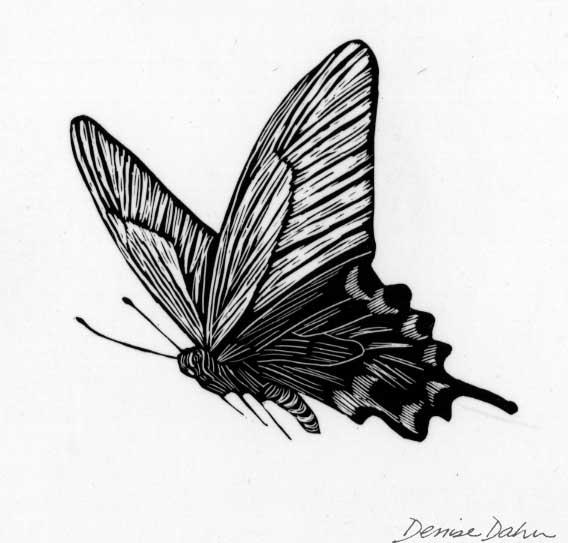 DDahnButterfly1