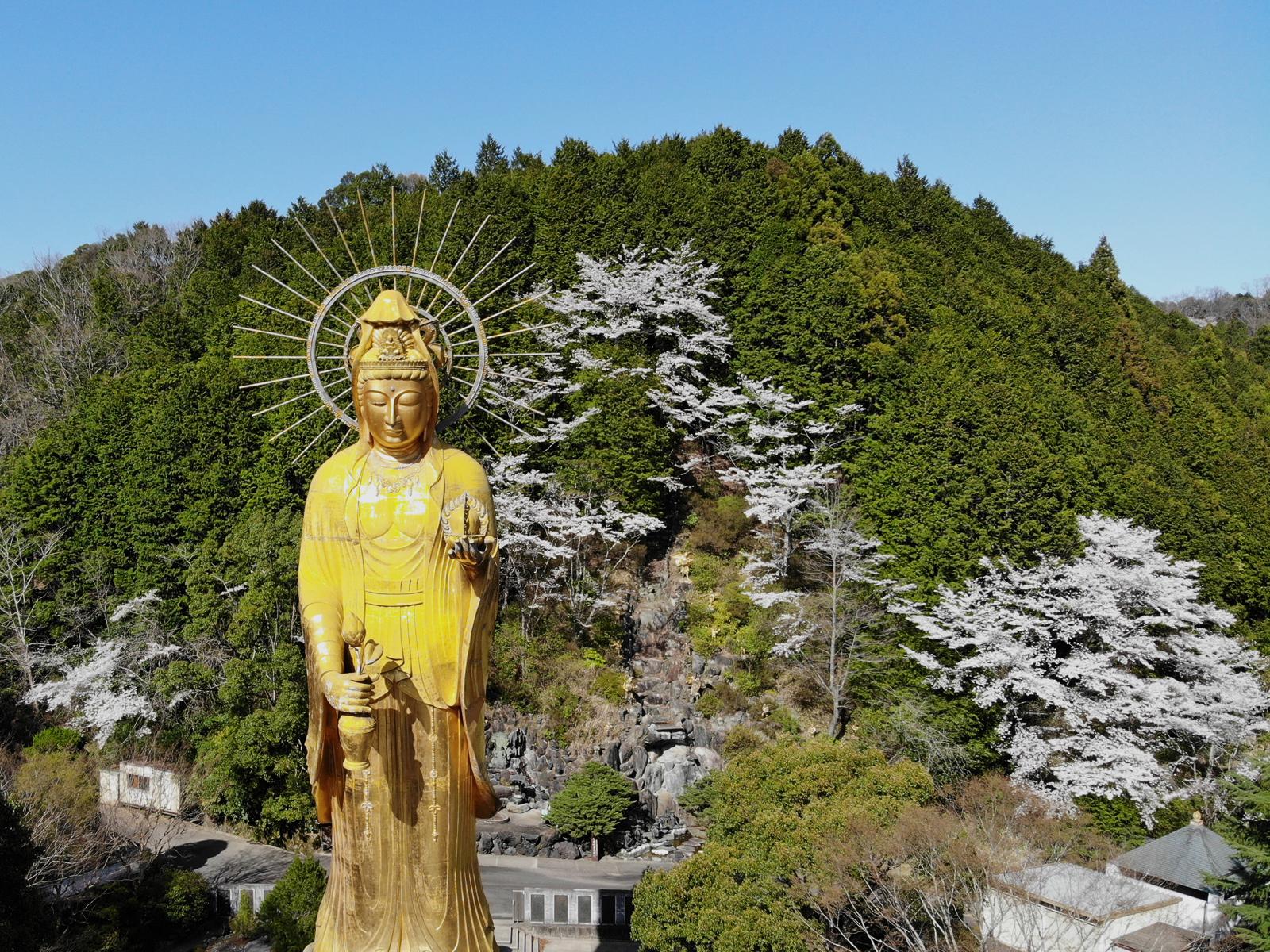 大観音寺の四季「春」純金大観音