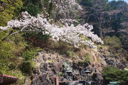 桜がそろそろ開花