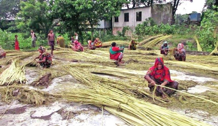Separating jute fibre from stalks | 2018-08-27