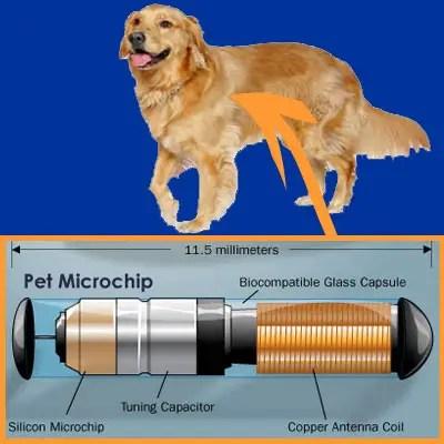 Microchip para perros-micompi.com