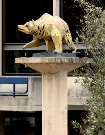 Golden Bear on Lower Sproul