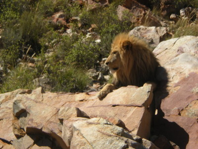 From my Safari at Aquila Private Game Reserve