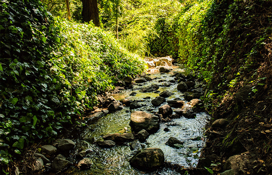 A rocky creek flowers through a leafy and green landscape.