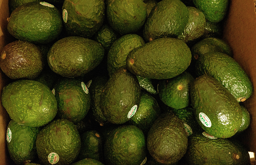 Avocad-who? The mystery behind the Californian obsession with avocados