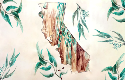 Illustration of California state and eucalyptus trees