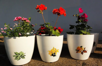 flowers in pots