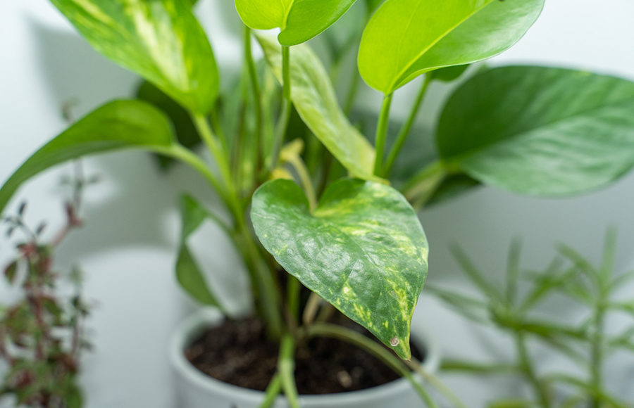 Photo of green leaves of plant