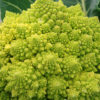 Photo of Romanesco broccoli