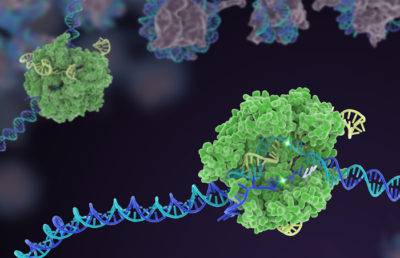 Photo of CRISPR Cas 9