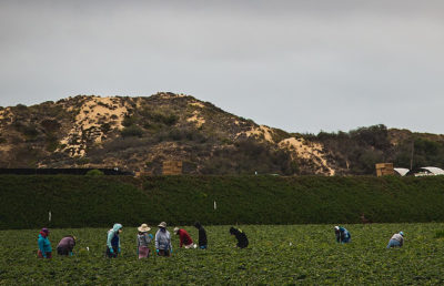 Photo of California farmworkers working in a field