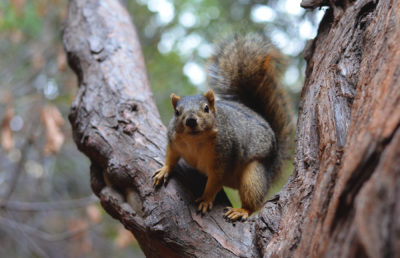 Photo of squirrel in tree
