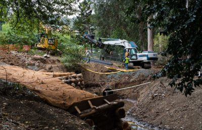 Photo of workers and construction cranes in the midst of clearing eucalyptus logs