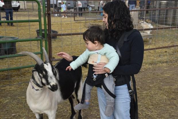 Rita Valente-Quinn and her son, Dennis Valente-Quinn, 1, pet goats