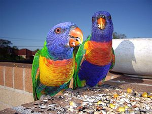 We took this photo Category:Images of parrots
