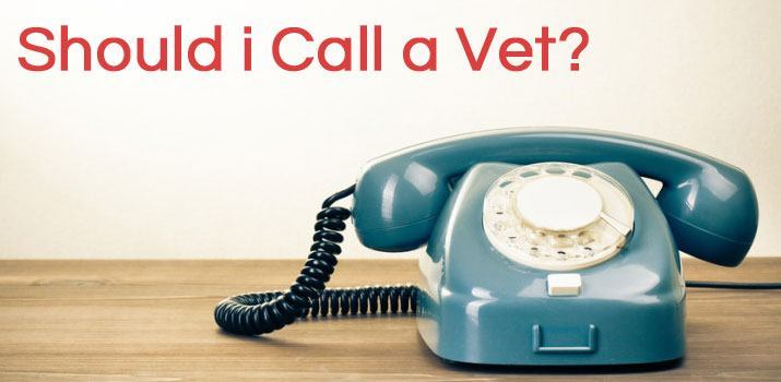 Should i Call a Vet?