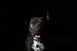 dog vision test in the dark