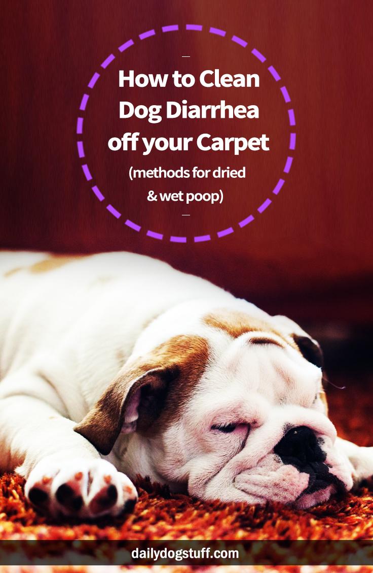 Dog Diarrhea All Over Carpet Carpet Vidalondon
