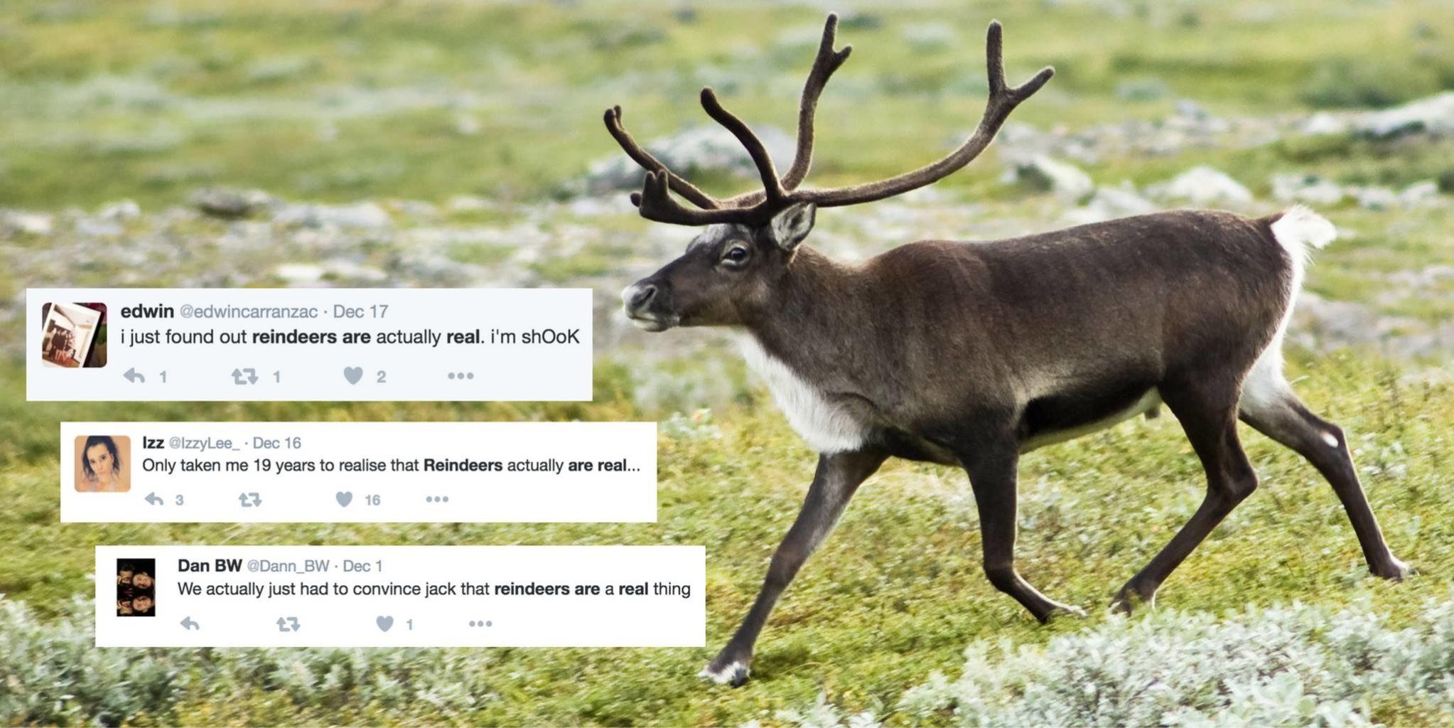Reindeer Plural