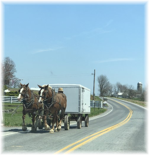 Amish bench wagon team in Lancaster County PA 4/22/18