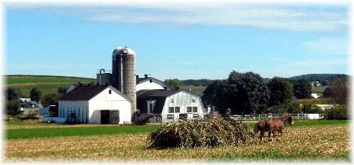 Amish harvest scene