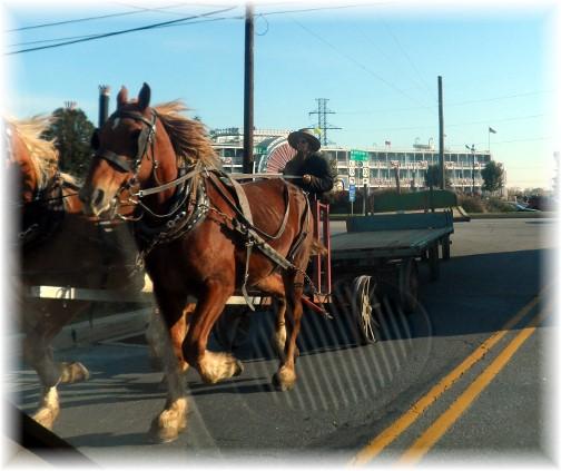 Amish tandem wagons 10/25/13
