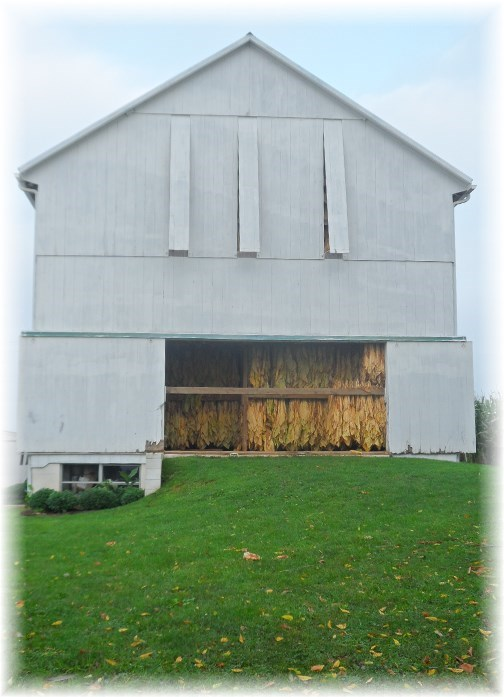 Amish tobacco barn