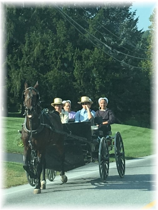 Amish youth in spring wagon 9/25/17