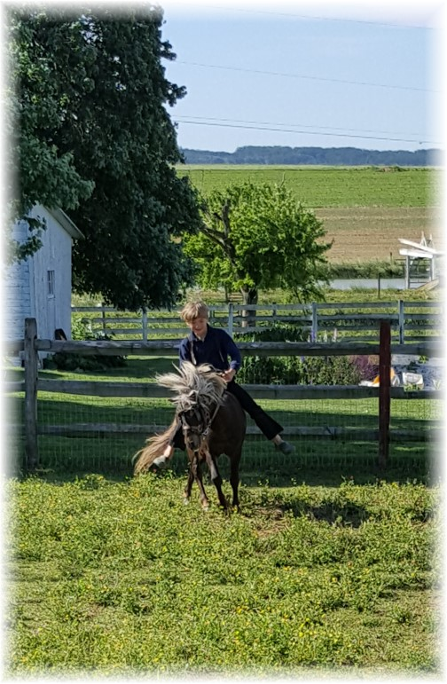 Eli riding pony bareback 6/9/16