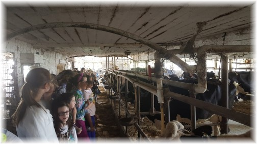 Jewish girls in milking barn 7/20/16