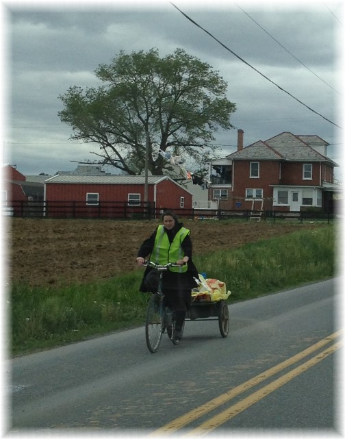 Old order Mennonite bike with cart 5/13/15
