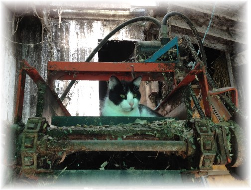 Barn cat on farm machinery 6/4/14