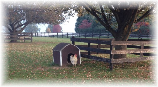Chickens in dog house 10/29/14