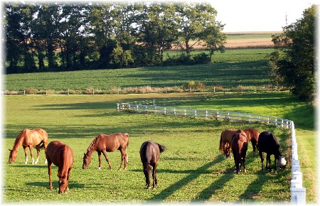 Photo of horses in pasture
