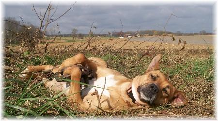 Photo of Roxie in fox trap