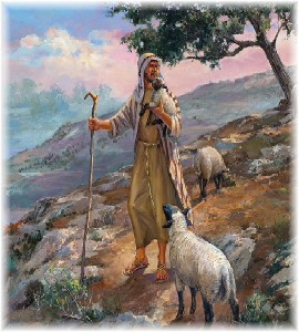 Shepherd with sheep