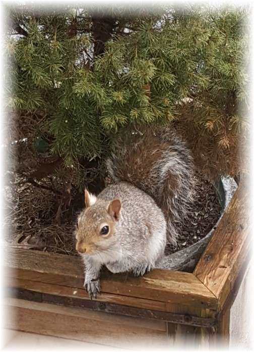 Squirrel 2/23/16