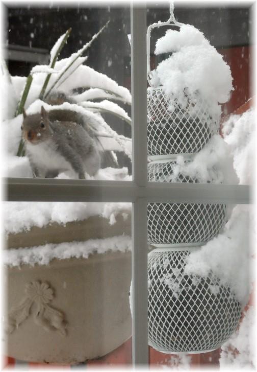 Squirrel at our Snowman birdfeeder 12/10/13
