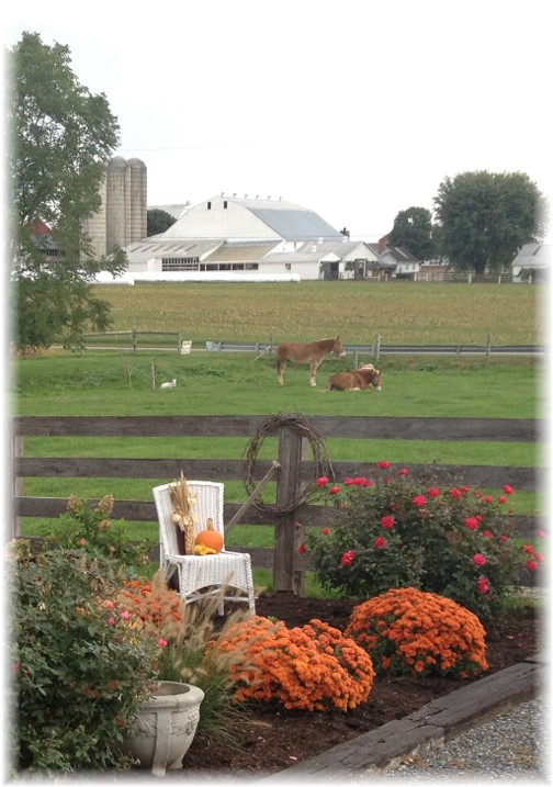 Amish farm near New Holland, PA 10/1/15