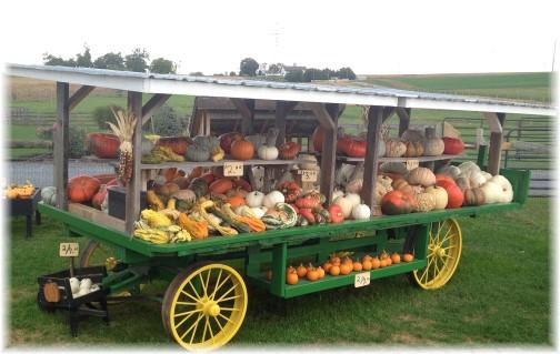 Amish harvest wagon near New Holland, PA 10/1/15