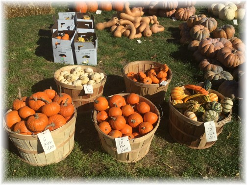 Autumn bounty 11/4/15