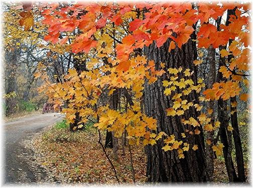 Fall scene in Minnesota (Photo by GEM)