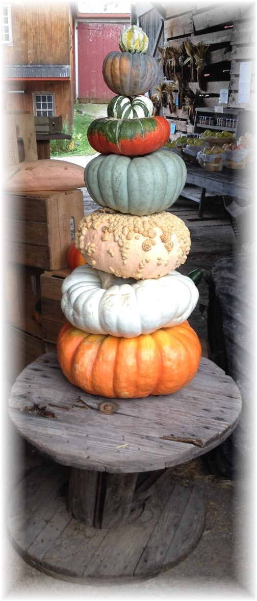 Union Mill Acres pumpkin tree 9/10/14
