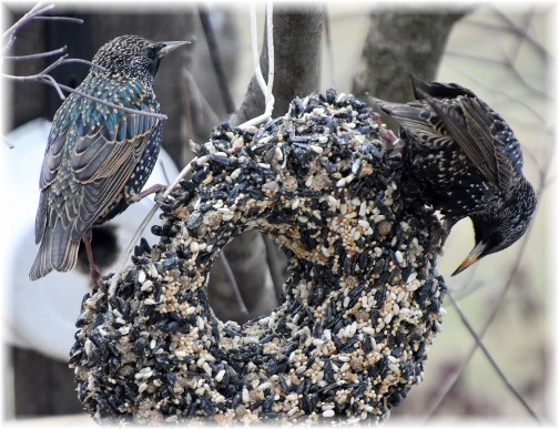Winter birds (Photo by Doris High)