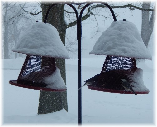 Birds feeding during snow storm 3/14/17