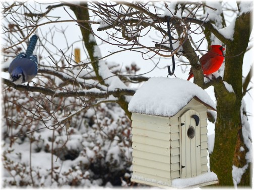 Colorful birds in snow (photo by Doris High)