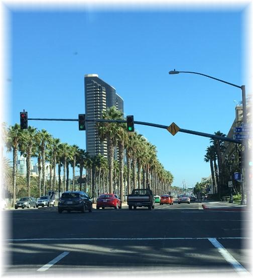San Diego Palm Trees 10/18/16
