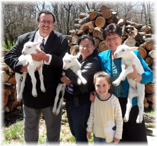 Baby lambs 4/21/13